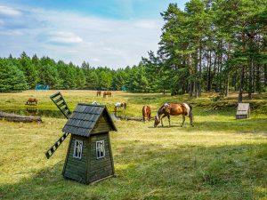 obozy młodzieżowe - nasze konie